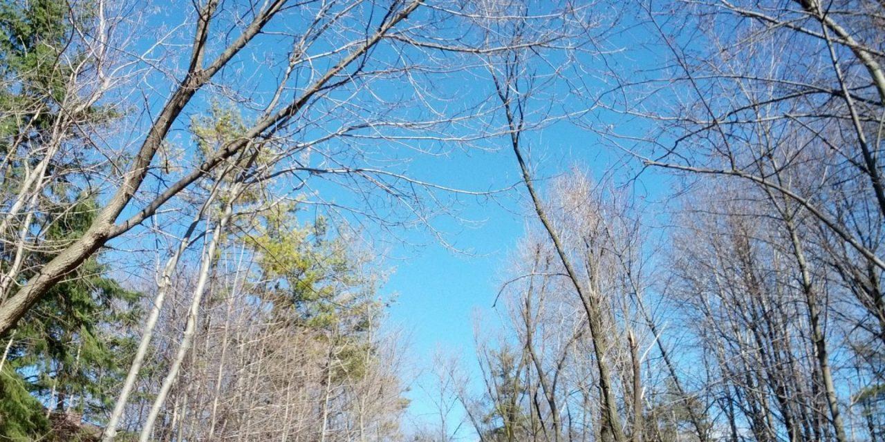 캐나다의 봄 풍경
