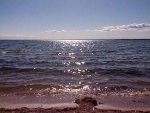 브라이언의 행복한 번역가 블로그 통번역가의 라이프스타일과 일상  캐나다 시골 생활