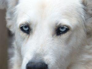 dog-186233_1280