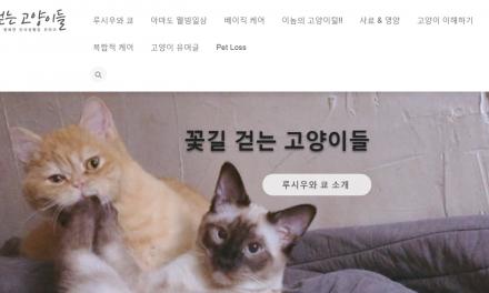 힐링이 되는 고양이 블로그